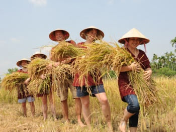 THE RICE PADDY EXPERIENCE